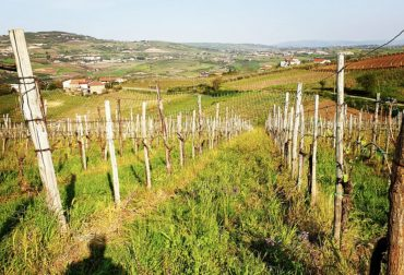 TORRE AD ORIENTE, Campania