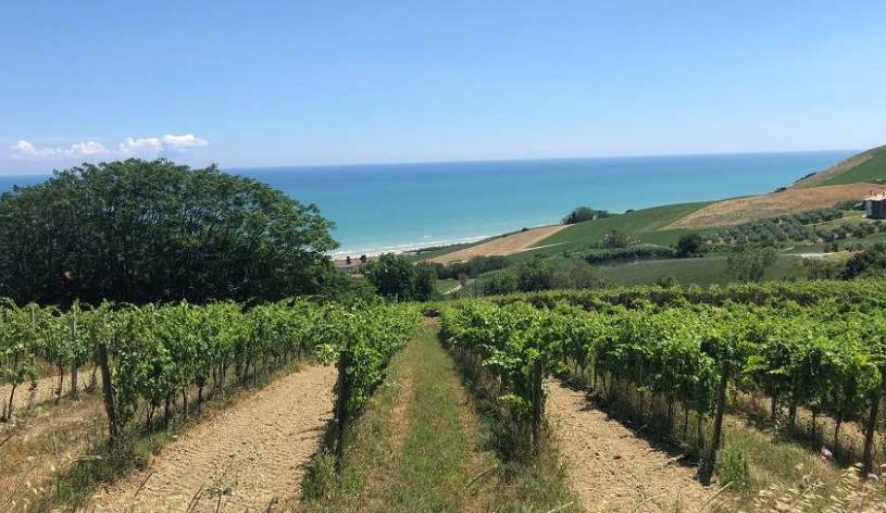 I vini della regione Abruzzo