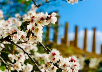 Primavera, la stagione della rinascita della natura