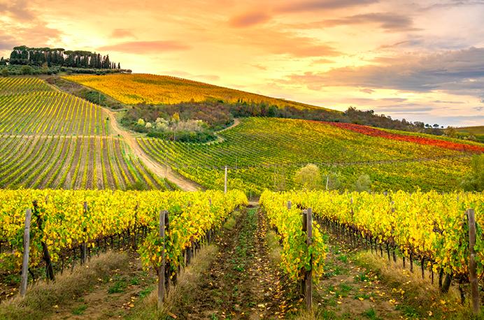 Toscana, patria dei grandi sangiovesi, ma non solo ….