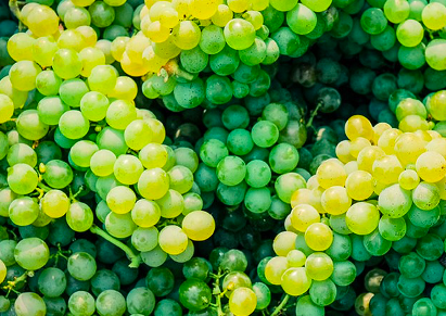 Le varietà bianche del Piemonte: l'Arneis
