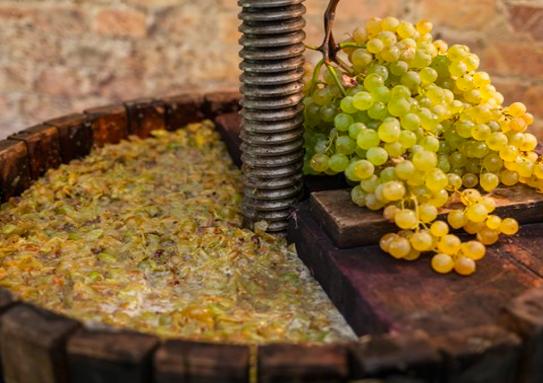 Lo sapevi qual è la differenza tra vino biologico, naturale e vegan??