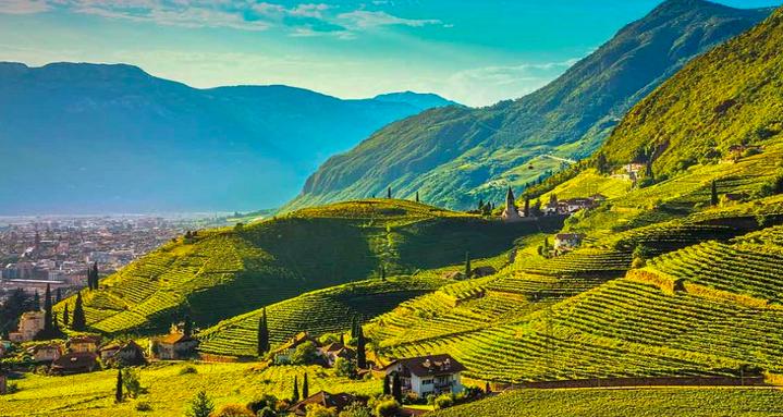 Il vino nel Trentino Alto Adige