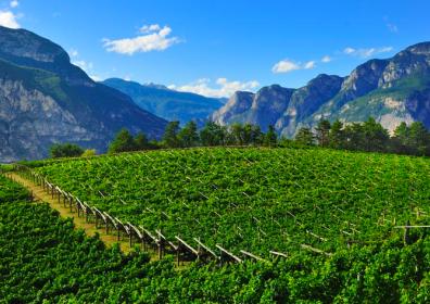 I vini del Trentino Alto Adige e le specialità enogastronomiche